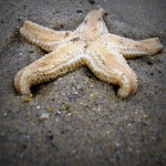 Easter: Starfish Massacre at Sutton on Sea
